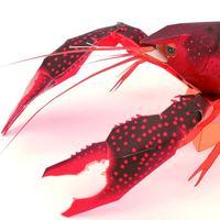 アメリカザリガニ:Red swamp crayfish(紙工作キット)
