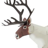 トナカイ:Reindeer(紙工作キット)