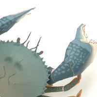 アミメノコギリガザミ:Giant Mud Crab(紙工作キット)