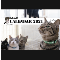 《猫カフェきぶん屋》可愛い猫たち満載カレンダー2021