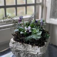 寄植え 陶器