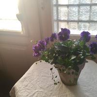 potgarden  鉢