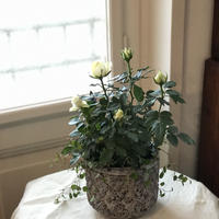 potgarden 陶器