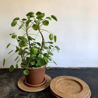 Planter Tray  - Rattan -