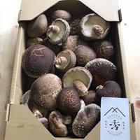 原木生椎茸 ご家庭用 いろいろ入り(1㎏入り1箱)