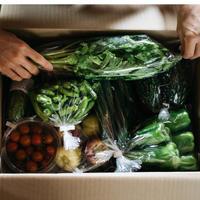 【単発】野菜ボックス M(10品)