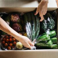 【単発】野菜ボックス S(7品)