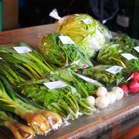 【定期便】野菜ボックス L(10品・大家族用)