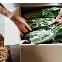【単発】野菜ボックス L(大容量10品)