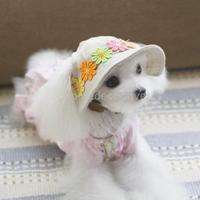 お花の帽子
