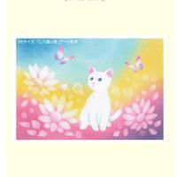 B6【白猫と蝶】