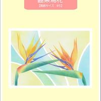 B5【極楽鳥花】