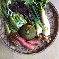 【定期便】野菜セット