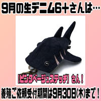‼️9月限定‼️【KASEI】ジーンベイザメ6+【ステッチ】(1622-X234)
