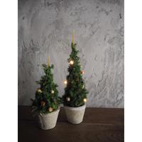 期間限定 クリスマスツリー