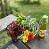 サラダセット(季節の野菜&ドレッシング)