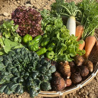 自然栽培・固定種野菜【Lセット】