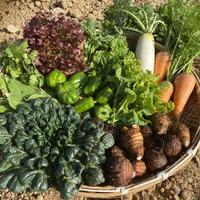 自然栽培・固定種野菜【Mセット】