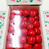 #23:夏一番の贈り物!初夏を彩る大粒さくらんぼ(500g化粧箱)
