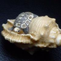 ▲友一作・本象牙法螺貝に亀根付24g・提げ物▲NE76▲