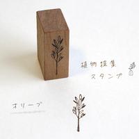 植物採集スタンプ:18『オリーブ』