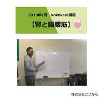 腎と腸腰筋(2019年1月kokokara講座)☆