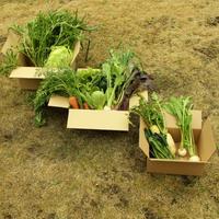 [月2箱お届け]田舎からのやさい定期便【木曜収穫】送料込み