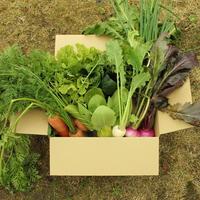 【2/2収穫発送】田舎のやさいセット [1箱だけお届け] 送料込み