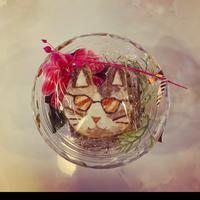 猫サラダ2種