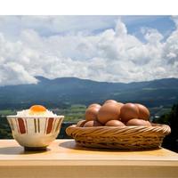 【定期便】康卵30個(毎月、隔週、毎週のいずれか選べます♪)