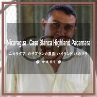 《送料¥200(メール便)》【ニカラグア】カサブランカ農園 ハイランド パカマラ(200g)中浅煎り