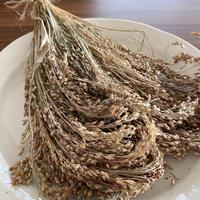 北海道産 早採りふんわり穂(赤キビ・農薬不使用)30g