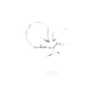 【CD】NOTO|NOTO