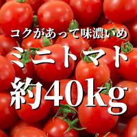 八ヶ岳産ミニトマト約40kg
