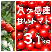 早割 八ヶ岳(長野県) 産 ミニトマト 約3.1kg バラ 甘くて味が濃い 免疫力UP