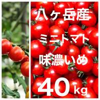 八ヶ岳(長野県) 産 ミニトマト 40kg バラ 甘くて味が濃い