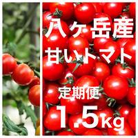 【定期便 】八ヶ岳産ミニトマト箱込約1.5kg 味濃いめ !トマト苦手なお子様にもお勧め
