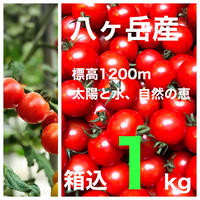 (通常価格で応援)コクトマ! こくがあって味濃いめ  八ヶ岳産ミニトマト  箱込約1kg    納期最優先
