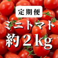 【定期便】八ヶ岳産ミニトマト 約2kg(トマトが苦手なお子様にもトマト)
