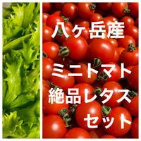 (コロナ支援 訳あり価格)味濃いめミニトマト(箱込み約1kg)と無農薬カットレタス1.5玉分   野菜の苦手なお子様にもオススメ! クール便、品質保証あり