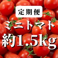 【定期便】八ヶ岳産ミニトマト約1.5kg(トマトが苦手なお子様にもオススメ)