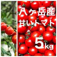 八ヶ岳(長野県) 産 ミニトマト 約5kg バラ 甘くて味が濃い 免疫力UP