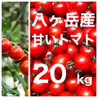 八ヶ岳(長野県) 産 ミニトマト 約20kg バラ 甘くて味が濃い 免疫力UP