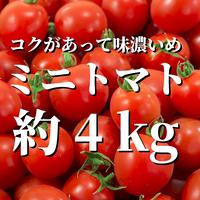 八ヶ岳産ミニトマト 約4kg