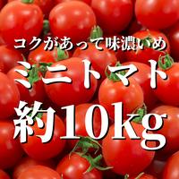 八ヶ岳産ミニトマト 約10kg