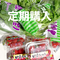 (定期便) 無農薬水耕レタスなどの葉物とミニトマトの絶品サラダセット