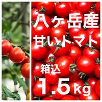 コクトマ! ミニトマト 箱込約1.5kg   味濃いめ トマト苦手なお子様にもお勧め
