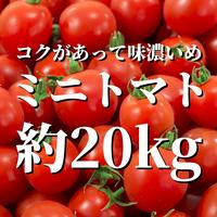 八ヶ岳産ミニトマト 約20kg