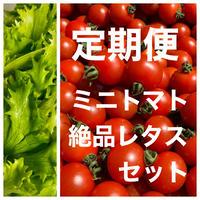 【引取定期便】エスプラナード赤坂商店街(振)セット無農薬レタスとミニトマト2パック