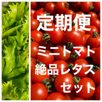 (定期便)味濃いめミニトマト(箱込み約1kg)と無農薬カットレタス1.5玉分 野菜の苦手なお子様にもオススメ! クール便、品質保証あり